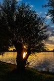 Under härlig solnedgång i sjöZoetermeerse plas reflekteras solen i vattnet till och med filialerna av en pil royaltyfria bilder