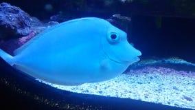 Under havet Royaltyfria Foton
