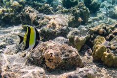 Under havet Arkivbilder