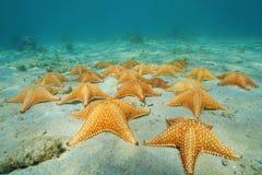 Under havet per gruppen av sjöstjärnan i det karibiskt royaltyfri fotografi