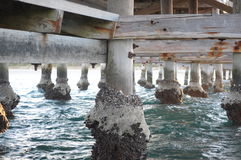 Under the Jetty. Barnacle encrusted wooden posts of jetty in the water Stock Photos