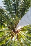 Under kokospalmen fotografering för bildbyråer