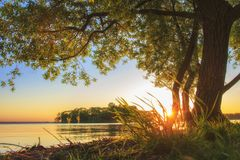 Under large tree on lake shore on sunset in summer. Summer landscape of nature. Big branchy tree on river bank in evening royalty free stock photo