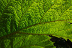 Under a Leaf Royalty Free Stock Photo