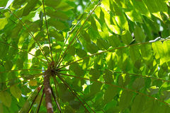 Under lush foliage looking upwards Royalty Free Stock Images