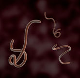 Under the microscope, ebola bacteria Stock Photo