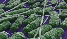 Under the microscope, salmonella bacteria Stock Photos