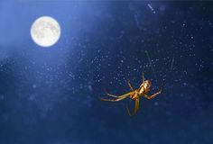 Under the Moon. Water droplets on a spider web create a starry sky effect. It seems that there is Spider constellation in the Cosmos Royalty Free Stock Images
