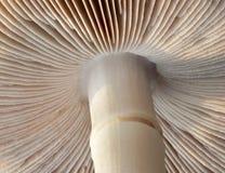 Under a Mushroom Royalty Free Stock Image