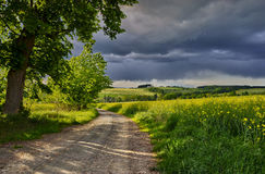 Under an old lime tree. Spring landscape with a path before the storm royalty free stock image