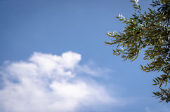 Under olive tree Stock Images