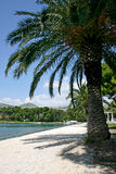 Under the palm. Scene from croatian adriatic coast royalty free stock image