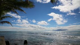 Under palm on the ocean. On the beach -  Oahu, Hawaii stock video footage