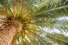 Under the palm tree Royalty Free Stock Photography