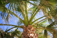 Under a Palm Tree Royalty Free Stock Images