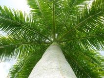 Under the Palm Tree Stock Photo