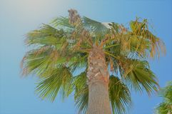 Under the palm tree. Beautiful summer day, seeing the sky from the shadow of the palm tree Royalty Free Stock Photography