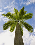 Under the palm tree and a blue sky with clouds Royalty Free Stock Photography