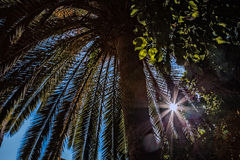 Under the palm tree with sunray Royalty Free Stock Image