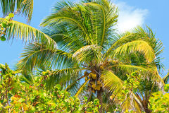 Under the palm tree Royalty Free Stock Image