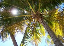 Under a palm tree Stock Image