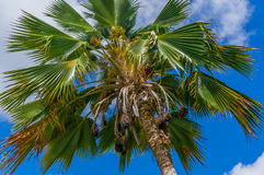Under Palm Tree Royalty Free Stock Photography