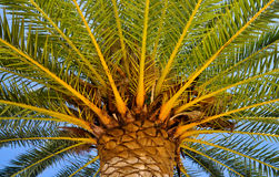 Under a palm tree Stock Images