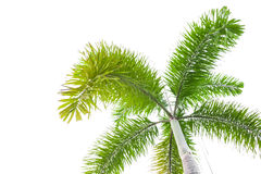 Under palm tree on the white background Royalty Free Stock Photo