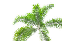 Under palm tree on the white background Stock Photo