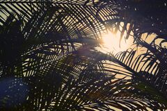 Under Palm Trees Royalty Free Stock Photography