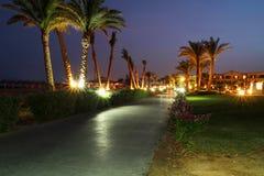 Under palm trees at night stock photos