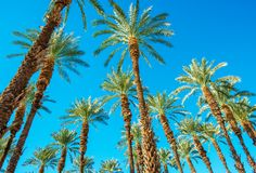Under the Palms Royalty Free Stock Photo