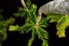 Under palmträden Arkivfoto