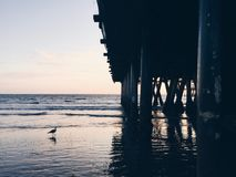 Under pier at sunset with a seagull in frame stock photo