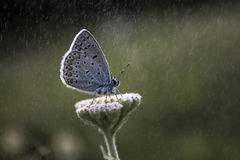 Under the rain. A beautiful butterfly in the rain Stock Image