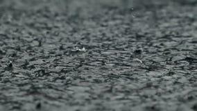 Under rainy weather. Dense rain drops pours pavement stock footage