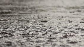 Under rainy weather. Dense rain drops pours pavement stock video footage