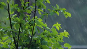 Under rainy weather. Green bush under heavy rain stock footage