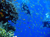 Under the Red Sea Stock Photography