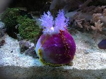 Under the sea beauty. Under the sea and the beauty of marine life Royalty Free Stock Photo