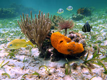 Under sea colors Stock Image