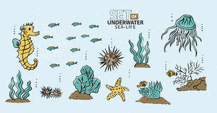 Under the sea, fish and sea-life. Vector Royalty Free Stock Images