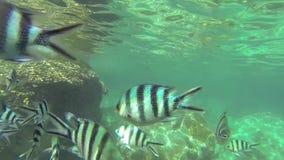 Under sea stock video footage