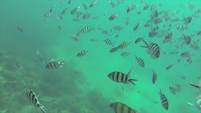 Under sea stock video