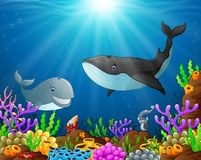 Under the sea. Illustration of under the sea Stock Images