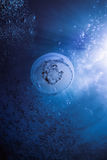 Under the sea Royalty Free Stock Images