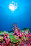 Under the sea at Similan,North Andaman Sea Thailand. stock photo