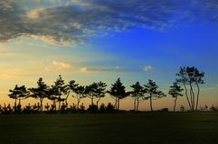 Under setting sun tree. Under seashore photography setting sun tree's sketch Stock Image