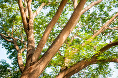 Under the shade of tall trees in tropical Stock Photos