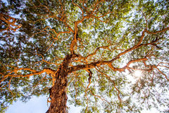 Under the shade of a tree. Royalty Free Stock Photos